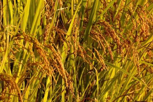 初中教师资格证科目三考试题型